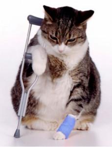Beckworth Injured Cat