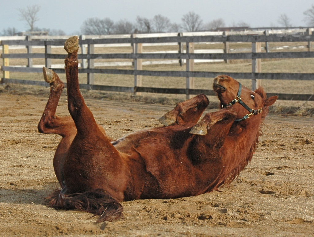 Beckworth Horse Rolling