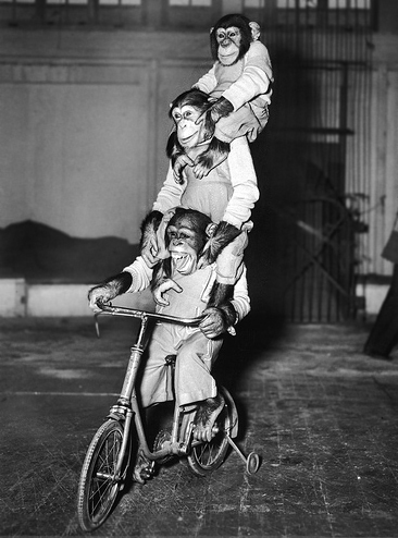 Beckworth_Chimps on a bike
