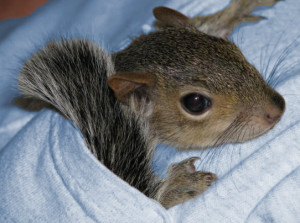 Beckworth_Squirrel In Your Pocket